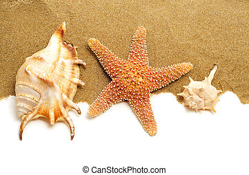 conch shells and starfish on the sand - some conch shells...