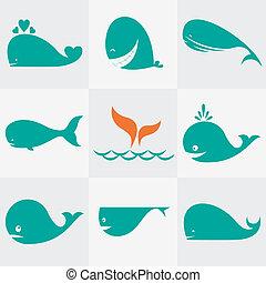 Conjunto, vector, ballena, iconos