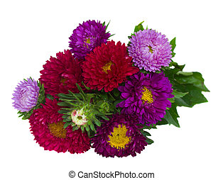 bouquet of red and violet aster flowers isolated on white...