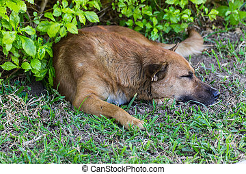Dog Sleeping On Lawn
