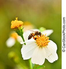enxame, flores, abelhas