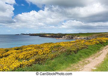 Coast path Pembrokeshire Wales UK - Caerfai Bay...