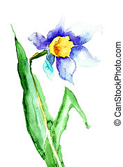 Narcissus flower - Watercolor illustration of Narcissus...