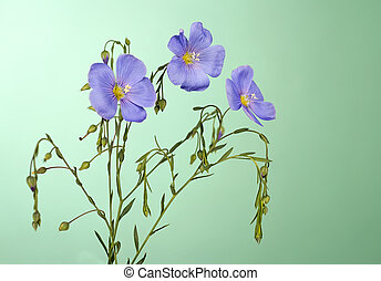 Flax flowers close up on a green background