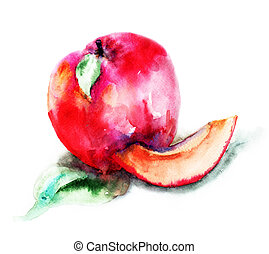 Peaches  - Watercolor illustration of Peaches