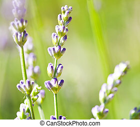 Little blue flowers, abstract macro