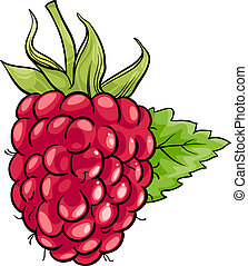 raspberry fruit cartoon illustration - Cartoon Illustration...