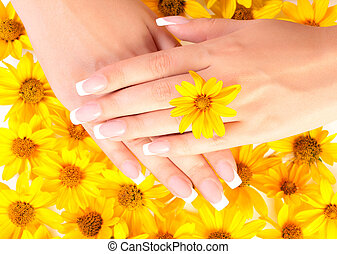 Fingernails and flowers - French manicure on the hands of...