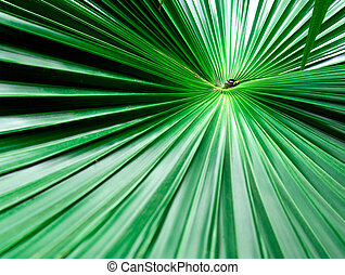 Green palm leaf with radial veins with radiant color viewed...