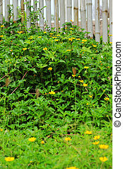 Bamboo fence - green - yellow flowers.
