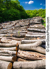 natural resource wood - piles of wood logs outdoor