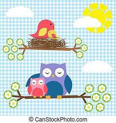 dois, famílias, -, Pássaros, corujas