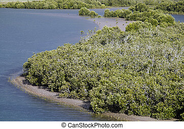 Mangrove grows along a river in Northland New Zealand.