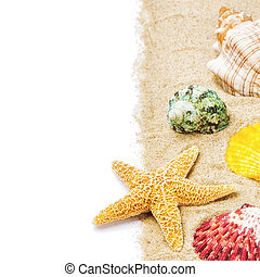 Colorful seashells on sand - Colorful seashells with sand...
