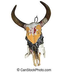 Bull Skull isolated