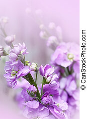 Soft floral background with Matthiola