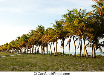 Palm trees and ocean in tropical destination with path -...