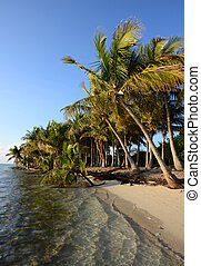Untouched tropical beach lined with palm trees - Untouched...