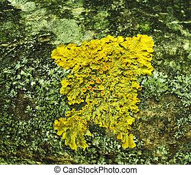 Lichen. Background.