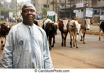 African cattle farmer or herdsman leading his herd of cows...