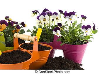 plantas, Semilla, jardinería