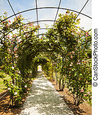 Garden with rose arch - Beautiful arch of rambling roses in...