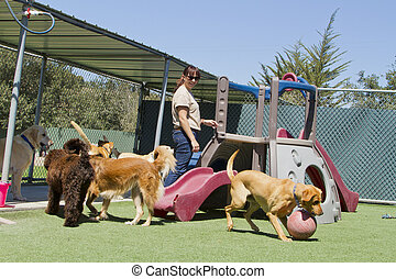 Pet Boarding - A female staff member at a kennel supervises...