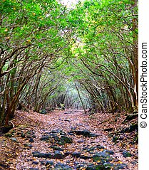 Forest of Aokigahara - Tunnel trail at Aokigahara Forest in...