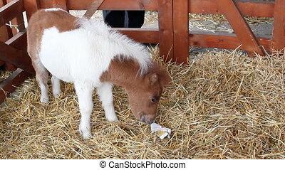 cute pony horse baby