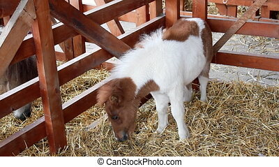 stable with pony horses