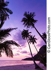 Silhouetted of coconut tree