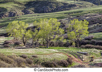 mountain valley in Colorado
