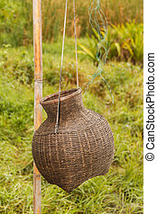 Creel Fish Hung on bamboo wood in a green grasses background...