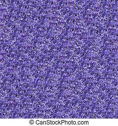 Clematis seamless pattern