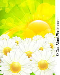 Chamomile background, vector