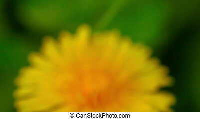 Abstract yellow flower with green background