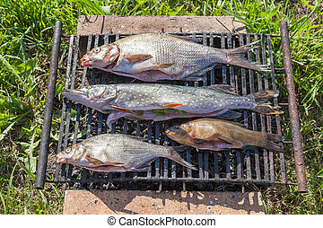 Fresh fish prepared for hot smoking
