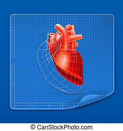 Heart structure blueprint, vector