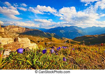 alperna,  Mountains, Blomstrar