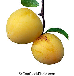 Two Yellow Plums isolated with clipping path