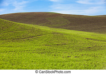 Farm Land and blue sky, green wheat fields