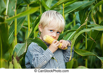 Boy Eating Corn on the cob - Little boy eating corn on the...