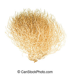 Tumbleweed Bush - Brown Bush of Crusty Dry Tumbleweed on...