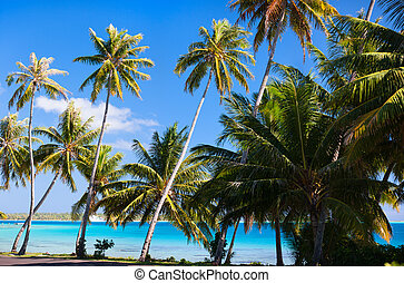 Bora Bora coast - Beautiful coast on Bora Bora island