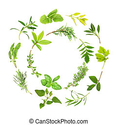 Herb Leaf Circles - Herb leaf circles of lemon balm, golden...