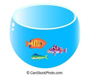 home aquarium with three fish