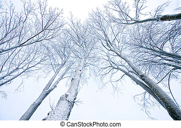 Snow-covered trees - Tops of snow-covered trees behind...
