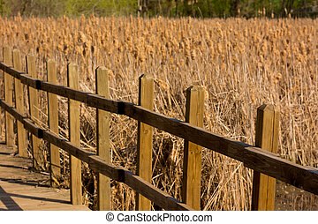 Wooden Walkway in a March in the Summertime in the Afternoon