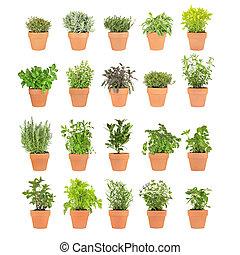 Twenty Herbs in Pots