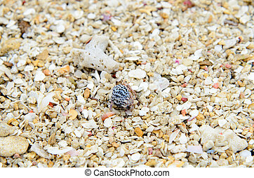 Hermit crab - The hermit crab which walks along the seashore...